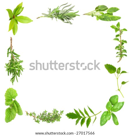 Herb leaf border of bay leaves, lavender, sage, valerian, (vallium substitute) basil,  thyme, lemon balm, and rosemary, over white background.
