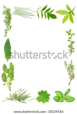 Herb leaf selection forming a border. Over white background.