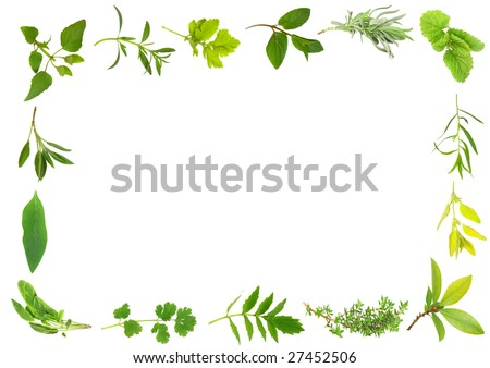 Herb leaf selection forming a frame over white background.