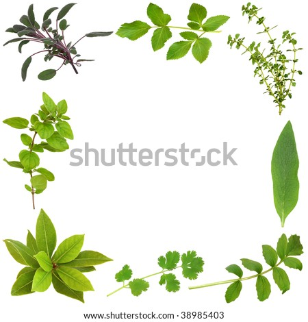 Herb leaf selection forming an abstract frame, over white background.