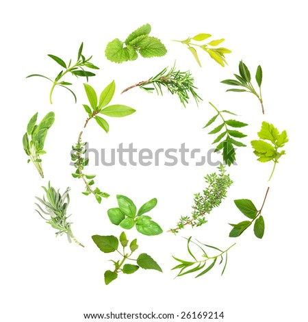 Herb leaf selection forming two circles, over white background. - stock photo