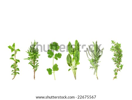Herb leaf selection of oregano, rosemary, coriander, sage, lavender and thyme over white background. - stock photo