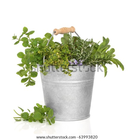 Herb leaf selection of thyme, sage, oregano and rosemary flowers in an old aluminum bucket, isolated over white background. - stock photo