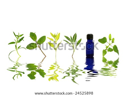 Herb leaf sprigs of hyssop, chocolate mint, golden marjoram, sage, and bergamot and an essential oil blue glass bottle with reflection over rippled water, over white background. - stock photo