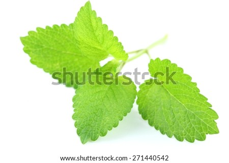 Herb lemon balm fresh leaf over white background - stock photo