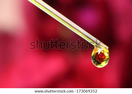 Herbal drop from a dropper - stock photo