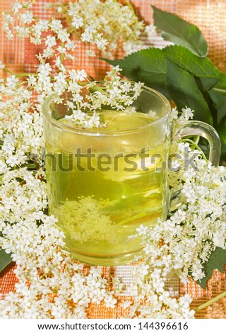 Herbal infusion or tea of Elder or Sambucus blossoms, used by coughts to aid diaphoretic. - stock photo