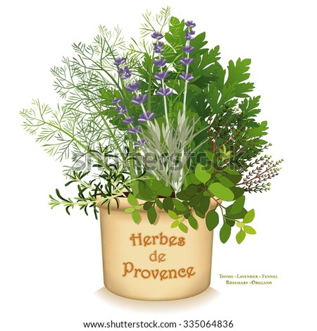 Herbes de Provence Garden Planter, aromatic cooking herbs of southwestern France, Rosemary, Sweet Fennel, Flat Leaf Parsley, Thyme, Oregano, Sweet Lavender in clay flowerpot crock isolated on white. - stock photo