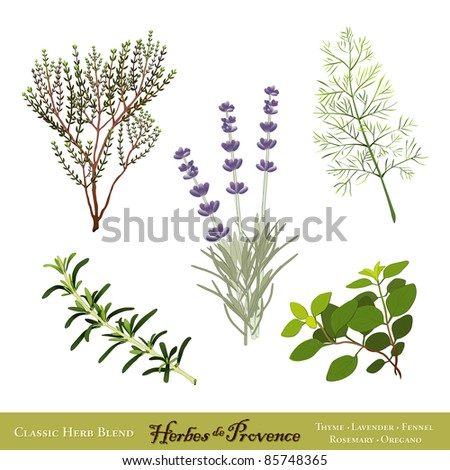Herbes de Provence. Traditional French herb blend from the south of France: Thyme, Sweet Lavender, Sweet Fennel, Rosemary, Oregano, isolated on white. - stock photo