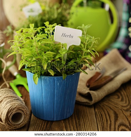 herbs and gardening tools - stock photo