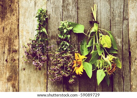 Herbs and sunflowers hung to dry against a rustic barn board background. - stock photo