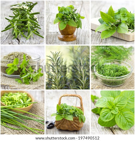 herbs collection - collage - stock photo