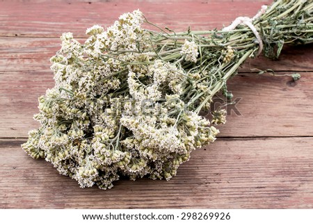 Herbs for herbal medicine: a bundle of dried flowers medicinal yarrow on an old wooden table  - stock photo