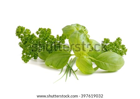 Herbs. Fresh herbs on white background. Herbs. Herbs isolated on white. Herbs.  Healthy herbs. Herbs.  Herbs for cook. Herbs.  Herbs for grilling.  - stock photo