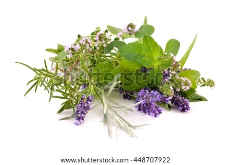 Herbs from garden on white background. Mixed fresh spices, Thyme, Rosemary, Lavender and Oregano.