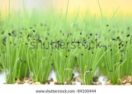 herbs growing - stock photo