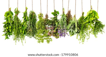 herbs hanging isolated on white background. food ingredients - stock photo