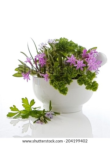 Herbs in a bowl and isolated on a white background - stock photo