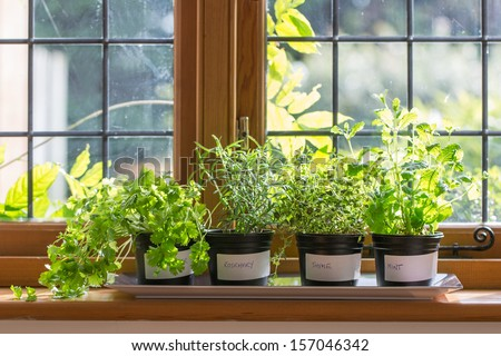 Herbs in plant pots growing on a windowsill - stock photo