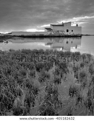 herbs in the river , Ria Formosa, olhao, Algarve, Portugal - stock photo