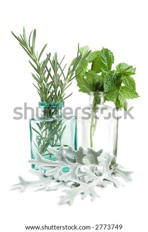 herbs - isolated on white
