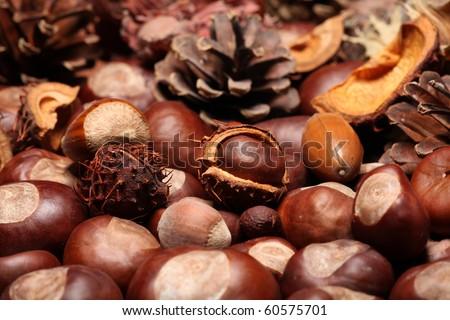 Herbstdekoration - stock photo