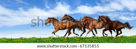 herd gallops in green field - stock photo