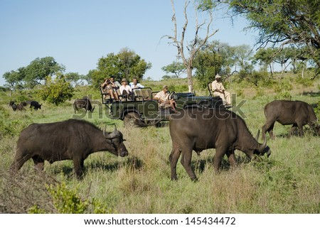 Herd of African buffaloes (Syncerus caffer) with tourists in jeep in background - stock photo