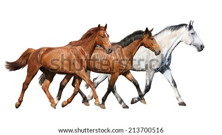 Herd of beautiful wild horses running free on white background - stock photo