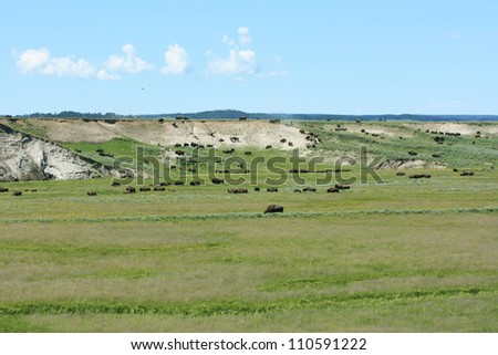 Herd of Bison, Yellowstone National Park, USA - stock photo