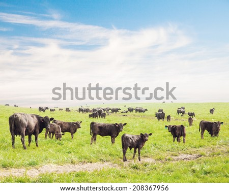 Herd of cattle grazing on the green grass - stock photo