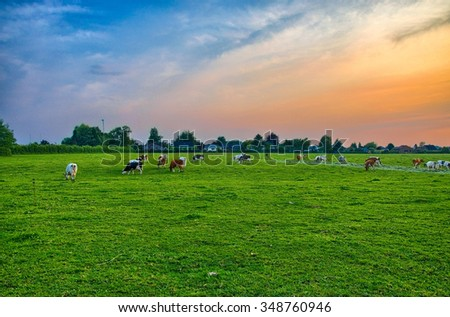 Herd of cows at summer green field near Liege, Belgium, Benelux, HDR - stock photo