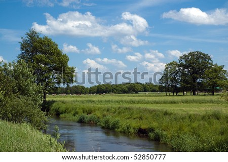 Herd of cows grazing in the meadows with river