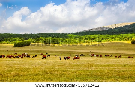 herd of cows in pasture