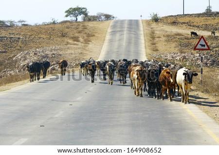 метод применим почему коровы истошно мычать на закате вопрос