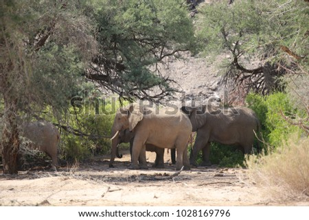 Herd of elephant in White Lady Lodge