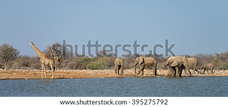 Herd of elephants and giraffes at a waterhole in Etosha National Park, Namibia - stock photo