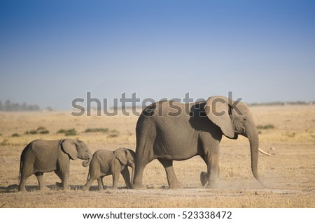 Herd of elephants in the dust Amboseli National Park Kenya