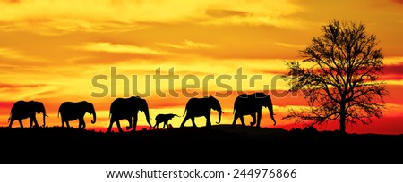 herd of elephants in the mountains - stock photo