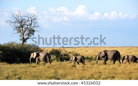 Herd of elephants in the savannah of Masai Mara, Kenya under a blue sky and clouds