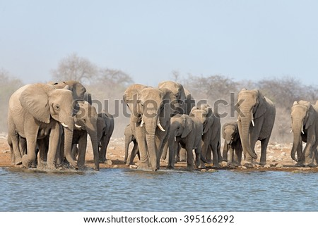 Herd of elephants raising dust in a dry environment to get to a waterhole in Etosha National Park, Namibia