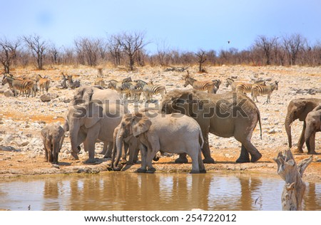 Herd of elephants with zebra in background at a waterhole in Etosha national park - stock photo