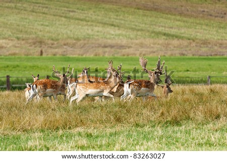 Herd of fallow deer on a meadow - stock photo