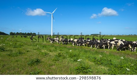 Herd of grazing cows in a meadow in summer