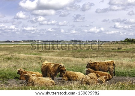 Herd of Hereford cows resting in a clear meadow - stock photo