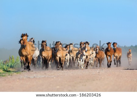 Herd of horses and foals runs on the road in summer. - stock photo