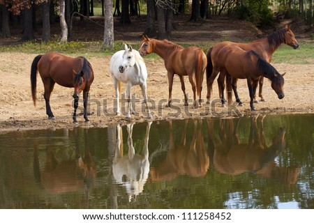 Herd of horses at pond - stock photo