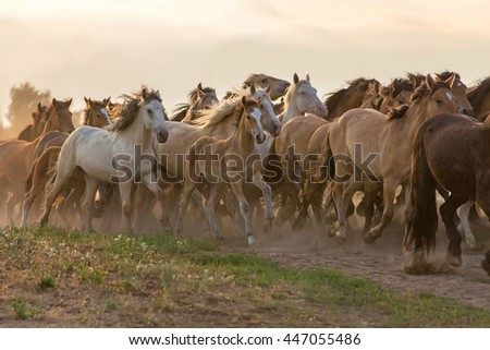 Herd of horses at sunset. - stock photo