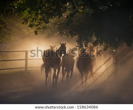herd of horses back on the dusty village road - stock photo