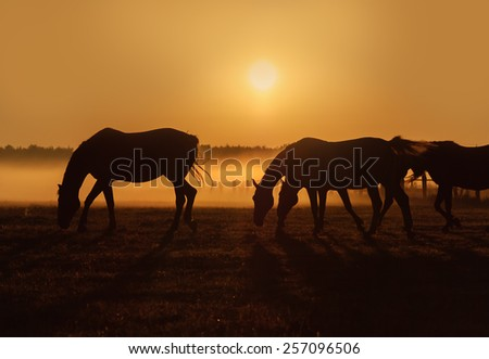 Herd of horses grazing in a field on a background of fog and sunrise